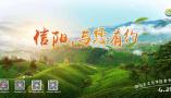 第29届信阳茶文化节暨线上直播活动盛大开幕