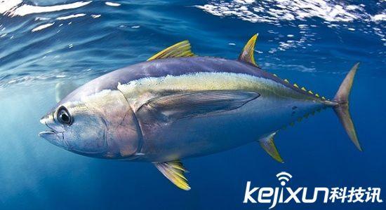 海洋动物十大速度排名