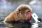 雪猴抢游客手机扔进水池
