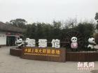 上海病死大熊猫母女遗体被封冻保存 其他展出正常