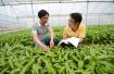"""新型职业农民:重科技、讲规模的农村示范""""富户"""""""