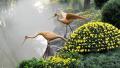 传承270年的菊花种植技艺,将在普陀宜川公园展示