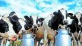 【JMedia】迈高美赞臣合作终止 贝拉米、A2等澳洲奶粉遭遇滑铁卢?