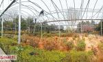 清明假期 中国国花园两万余株牡丹盛开
