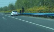 连霍高速郑州段一私家车应急车道停车 两人踩护栏摘榆钱