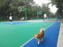 沈阳科普公园篮球场遛狗一举两得? 部分健身者却不满