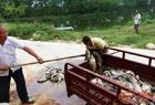 万斤鱼夜间蹊跷翻塘