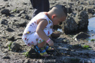 大潮退了,快来海滩挖蛤蜊!