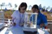 青岛试种海水稻亩产最高超600公斤 袁隆平:可以打优秀