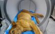 小狮子骨折被送宠物医院 麻醉后表情萌化了