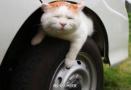 你的车可能养喵了!