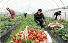 沈阳三年内家庭农场将突破1万家 建休闲采摘园60个