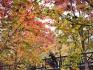 40万亩彩叶变色 北京渐入红叶最佳观赏期
