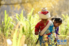 松巴藏寨的深秋