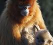 动物母子动人瞬间