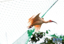 沈阳今年放归保护鸟类1700余只 行政处罚5人