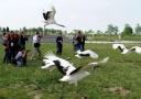 坐拥多个重要湿地的江苏盐城 拟牵头申报世界自然遗产