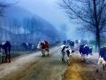 湘桂边城步南 南山之巅有个南方的呼伦贝尔