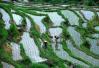乡村振兴不走寻常路,温州泰顺1400多户农民拆房造田