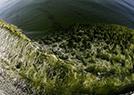 海中森林奇异景象