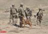 驻阿美军加强军事行动:伤亡大幅跃升 难阻局势恶化