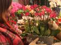买盆鲜花迎新年