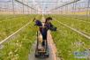 平顶山市湛河区全力打造现代农业示范园区