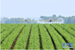 中国农业对外合作排名榜出炉 哈尔滨企业跻身全国百强