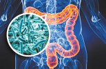"""美研究发现肠道细菌""""乱跑""""可能诱发自身免疫疾病"""