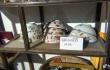 71岁老济南收藏老物件记录变迁 藏品上万件开起博物馆