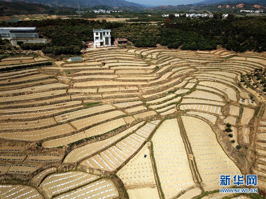 """澳门在线电子游艺:""""3010份水稻基因组计划""""揭示水稻遗传信息""""密码"""""""
