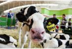 国务院:采取措施加快推进奶业振兴 保障乳品质量安全