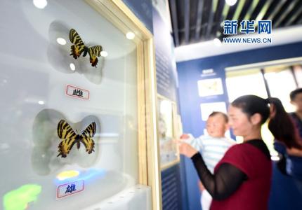 这种野生珍稀蝴蝶在南京仅存83只!