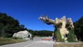 沈阳国家森林公园将增建这些特色项目 想去玩吗?