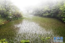 亚马孙雨林发现专吃蜗牛的蛇类新物种