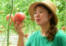 无土栽培绿色蔬菜