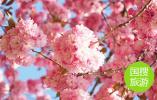 南通鲜花小镇 庆重阳节向老人免费开放三天
