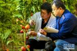 饶阳:农产品质量监管体系呵护市民餐桌