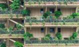 """阳台有""""一座森林"""""""