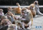 """""""猴哥""""造访井陉一村庄 """"大方""""串门玩耍"""