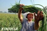 河北:确保今年粮食总产量700亿斤以上