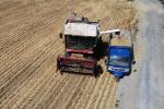 小麦开镰收割!河北省国有粮企已腾并仓容30亿公斤