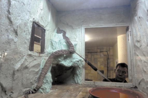 旅順蛇博物館的關停引發的思考 生存金該從哪掙?