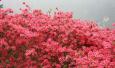 周末内蒙古|春夏,当爱神降临在呼伦贝尔