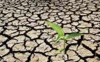 庄河33.15万亩农作物遭遇旱情 一个月未出现有效降雨