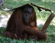 动物避暑奇招多
