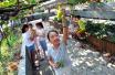 江汉区居民意外收到600斤免费葡萄 原是他们努力了22年
