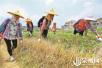 惠安部分乡镇开始灭蚁工作 统一投放效果才最佳