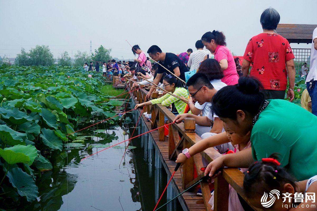 日照:百亩藕池引来千人钓龙虾