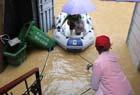 居民买船出行避洪水